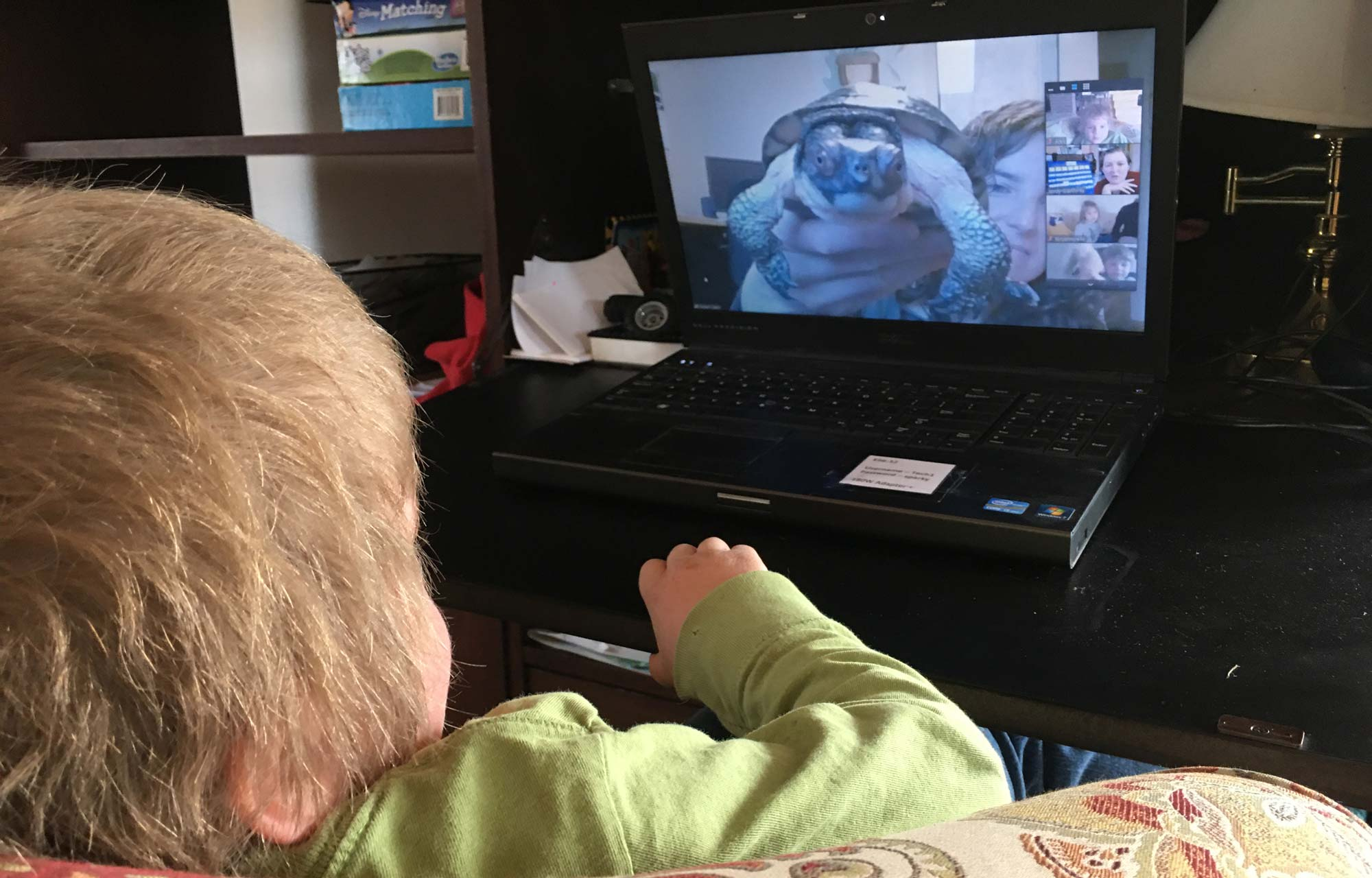 Young boy looking at turtle over computer video