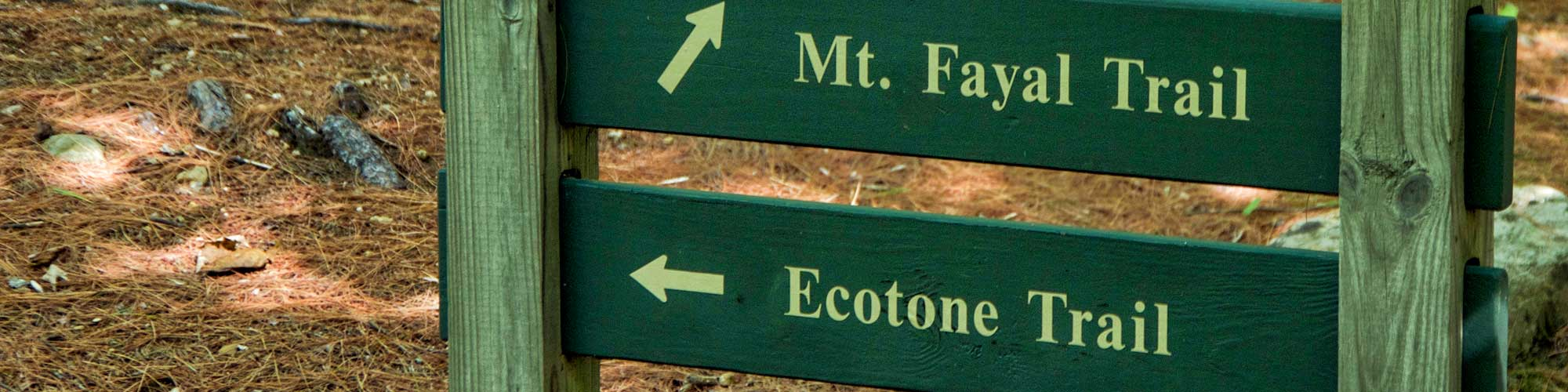 Hiking trail signs pointing to Ecotone Trail and Mount Fayal Trail