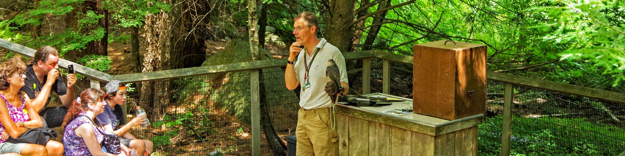 Naturalist presenting live animal program with Sharp-shinned Hawk to visitors.