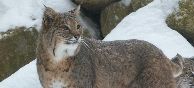 Wild Winter Walks: Guided Tours of the Live Animal Exhibit Trail