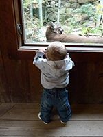 Young visitor with mountain lion