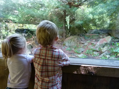 Pre-school programs at Squam Lakes Natural Science Center