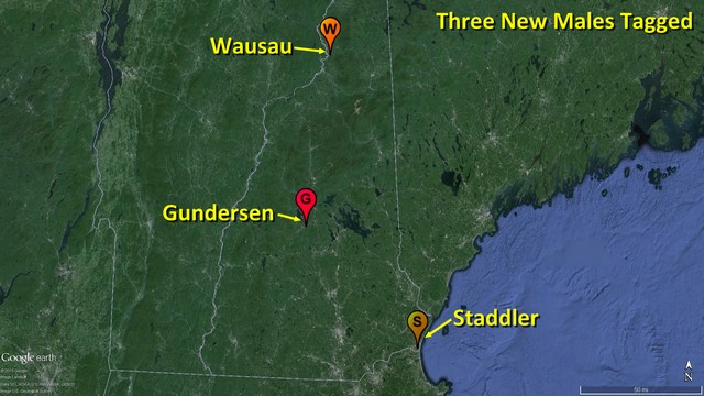 Staddler, Gundersen, and Wausau New Hampshire locations
